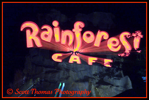 Rainforest Cafe sign zoomed in at Downtown Disney, Walt Disney World, Orlando, Florida.