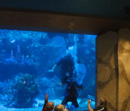 Hidden Mickeys At Coral Reef Restaurant And The Outpost