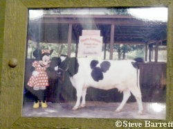 Photo of Minnie Moo