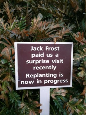 JackFrost.jpg