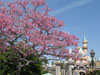 Disneyland Wallpaper Sleeping Beauty Castle with flowers