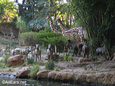 Animals at Jungle Cruise
