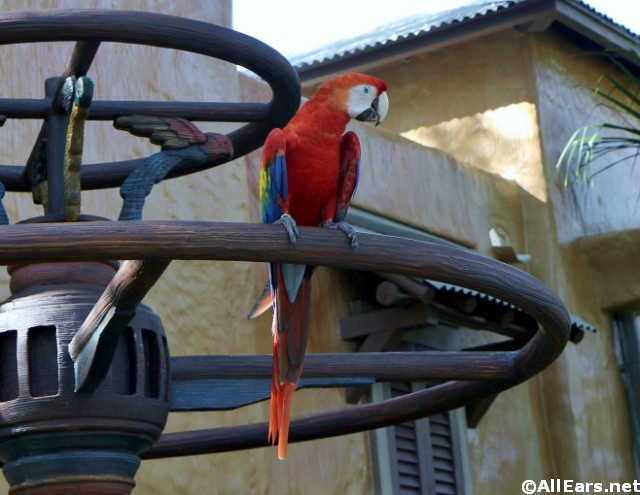 Winged Encounters at Animal Kingdom: Photos and Video