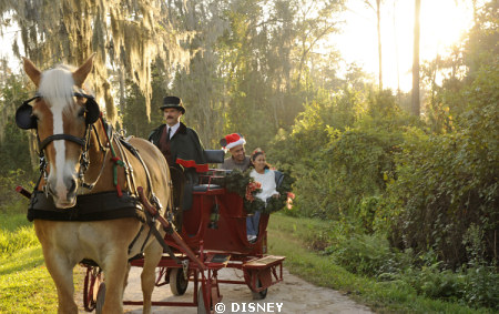 Horse-Drawn Sleigh Rides Available for Booking