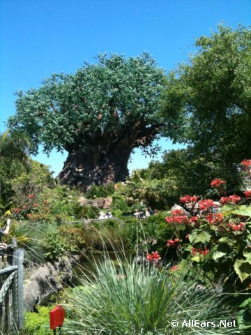 The View to Broadcast from Disney's Animal Kingdom