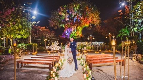 Tree of Life Now Available as Wedding Venue