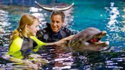 dolphins_in_depth.jpg