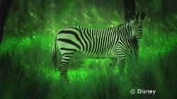night-safari-00-new.jpg