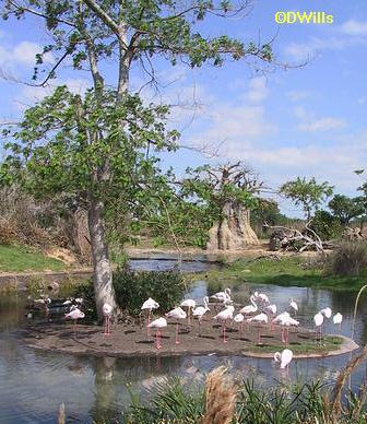 Savanna Flamingo Pool