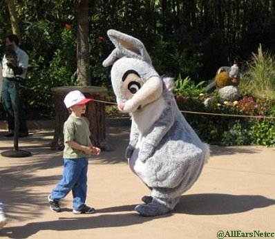 Thumper Meet And Greet At Animal Kingdom Allears Net