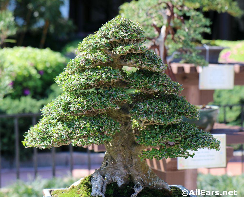 2015 world showcase photos for Mini japanese garden