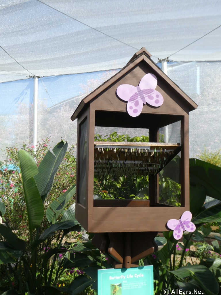 2018 Epcot Flower and Garden Festival Butterfly House ...