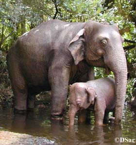Jungle Cruise Elephants